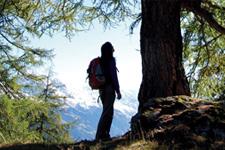Se ressourcer auprès des arbres Arbres12