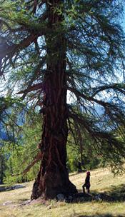 Se ressourcer auprès des arbres Arbres14