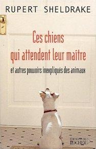 illustration de livre Ces chiens qui attendent leur maître et autres pouvoirs inexpliqués des animaux