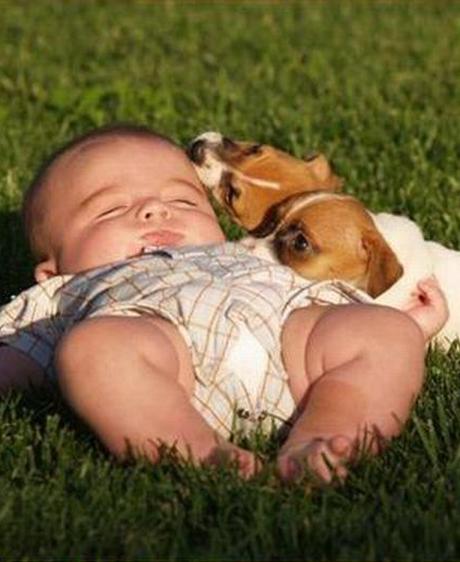 Avoir un chien, c'est bon pour bébé