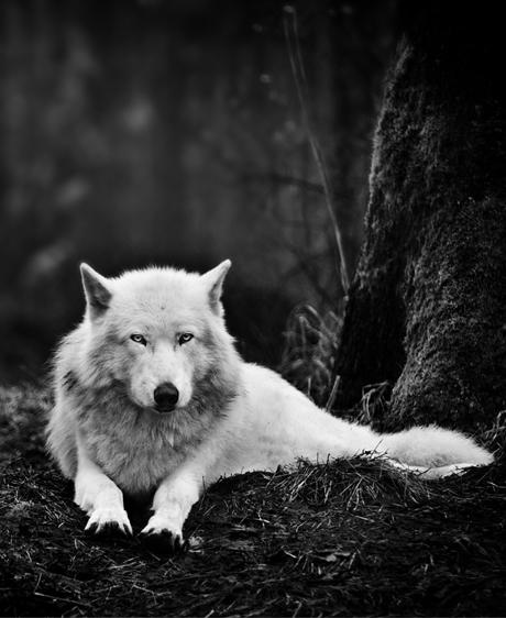 Les animaux en toute conscience