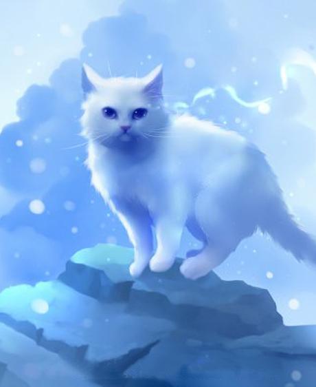 Un maître guéri par son chat depuis l'au-delà ?