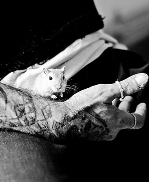 Des animaux au secours des prisonniers
