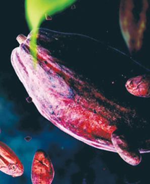 Cacao, un voyage à la rencontre du cœur