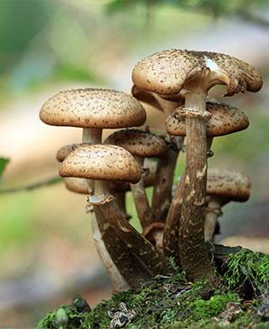 Les champignons façonnent le monde