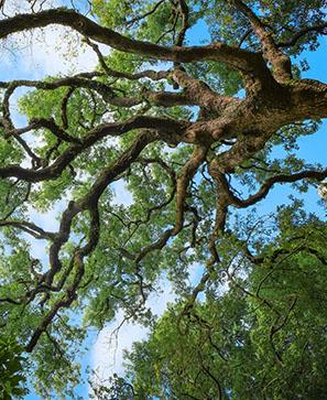 De l'enfance du chêne aux racines du mal