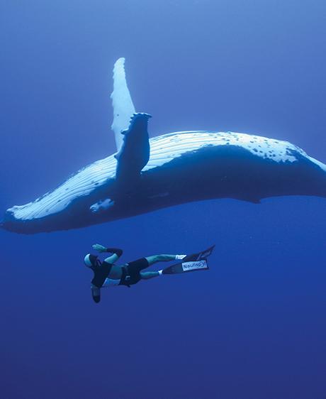 Duo sous les mers :  les baleines parlent aux humains