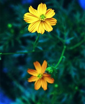 Plantes, les semblables soignent les semblables