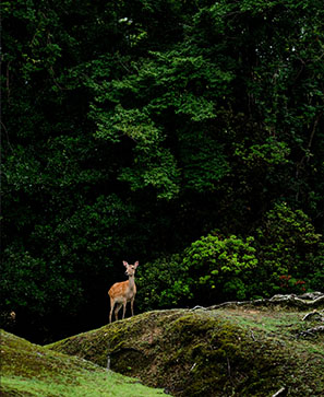 D'Ise à Nara, le souffle des kamis