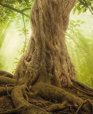 L'arbre, fruit de guérison
