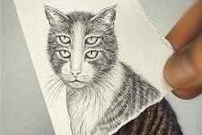 illustration de l'article Un chat vivant et mort à la fois