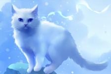 illustration de l'article Un maître guéri  par son chat depuis l'au-delà ?
