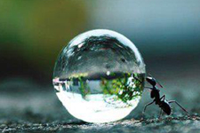 illustration de l'article La conscience collective  des fourmis