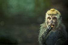 illustration de l'article Les animaux ont-ils des droits ?