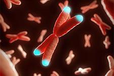 illustration de l'article La télomérase, l'enzyme qui prend soin des gènes