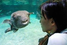 illustration de l'article Les poissons ont-ils des états d'âmes ?