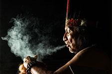 illustration de l'article Tabac et ayahuasca : deux esprits, deux plantes enseignantes